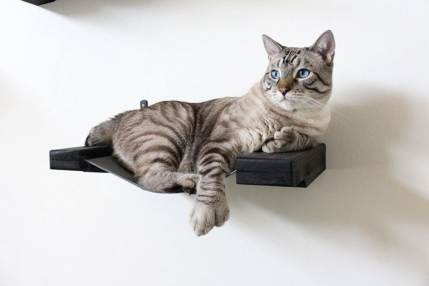 if you love your dog or cat, then check out these #budget-friendly #gift ideas for dogs on Christmas, help you save money and the same time keep the furry friend happy too. pet cat litter box, #giftideasfordogandcatlovers  pet dog accessories pet activites  #petfunny   Gift ideas for dogs and cats